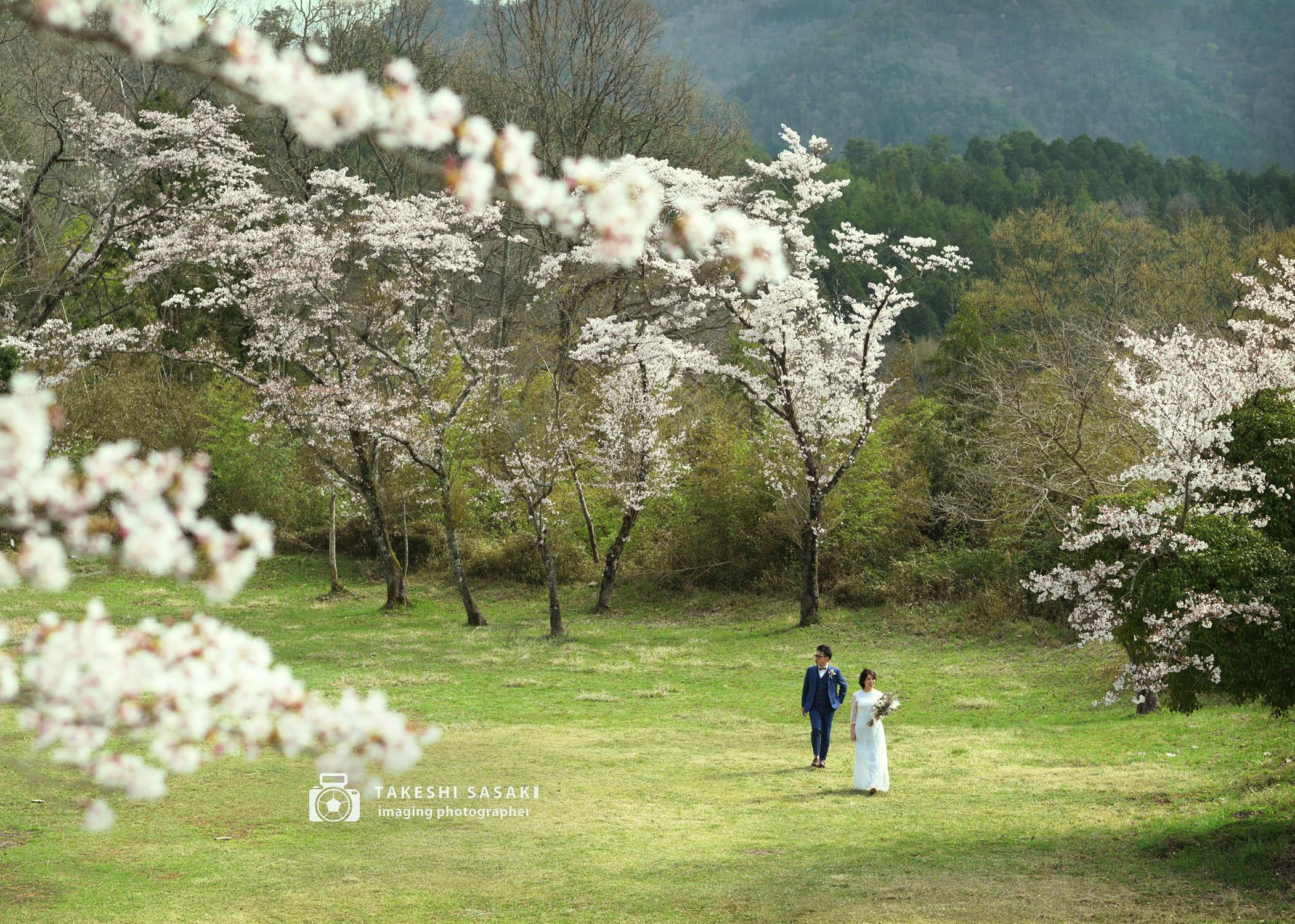 桜とフォトウェディング